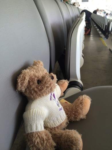 This Crocus Bear is waiting for Pakistan to come in to bat...
