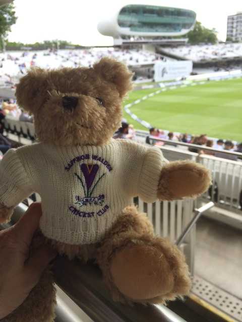 This Crocus Bear is at the Home of Cricket!