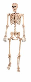 skeleton picture
