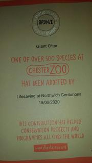 Giant Otter cert