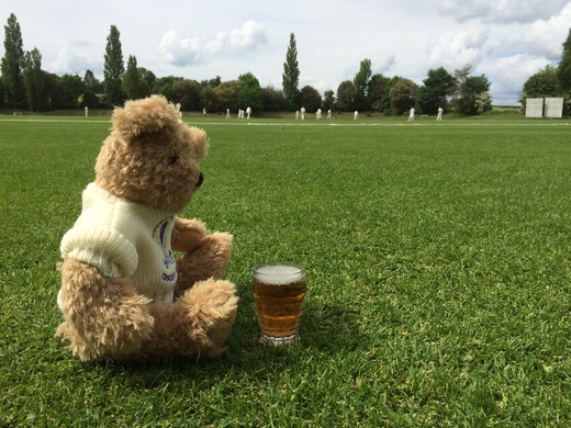 This Crocus Bear likes a pint with his Sunday cricket